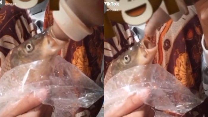 Viral Video TikTok Wanita Beri Susu pada Ikan, Akui Hanya untuk Hiburan sebelum Digoreng